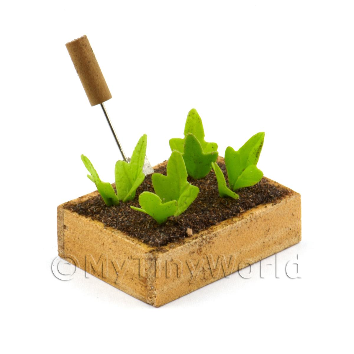 Miniature Garden Wooden Crate With Growing Spinach