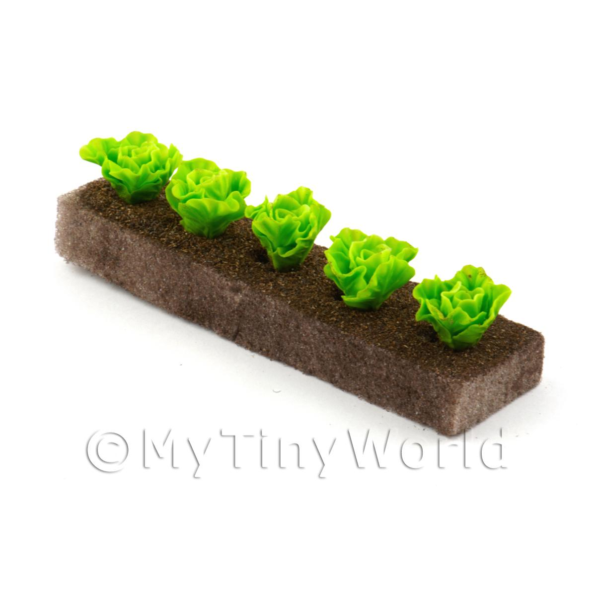 Strip of 5 Miniature Lettuces For The Allotment