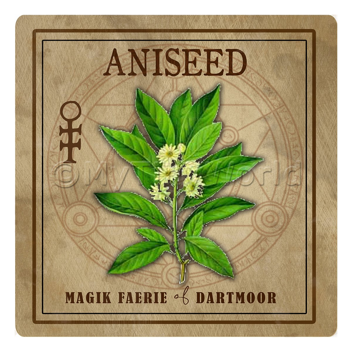 Dolls House Herbalist/Apothecary Square Aniseed Herb Label