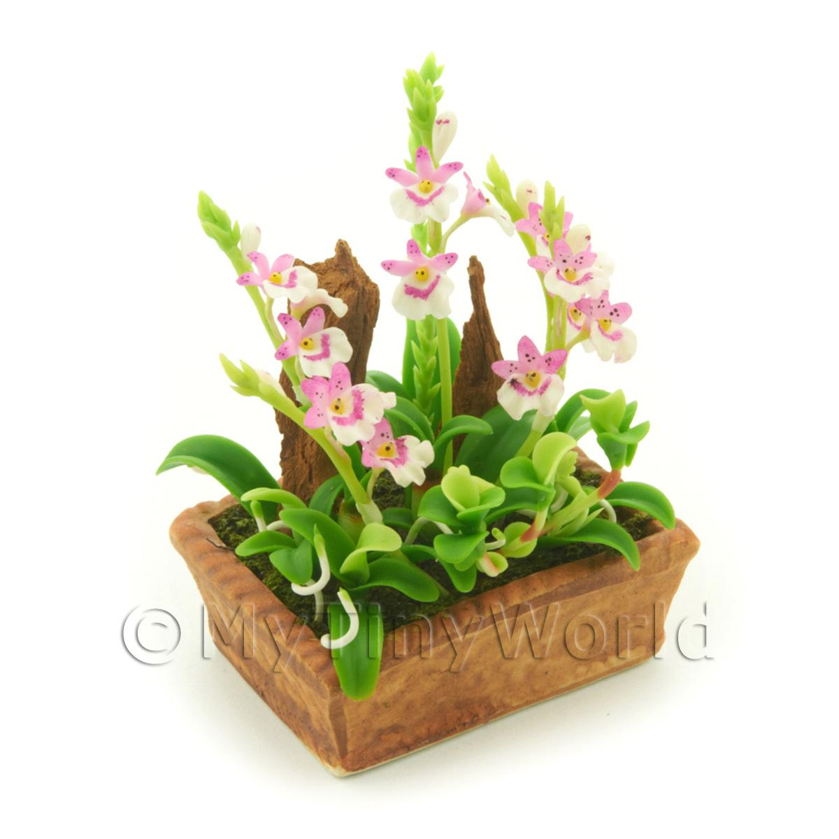 Dolls House Miniature Pink and White Cattleya Orchid Display