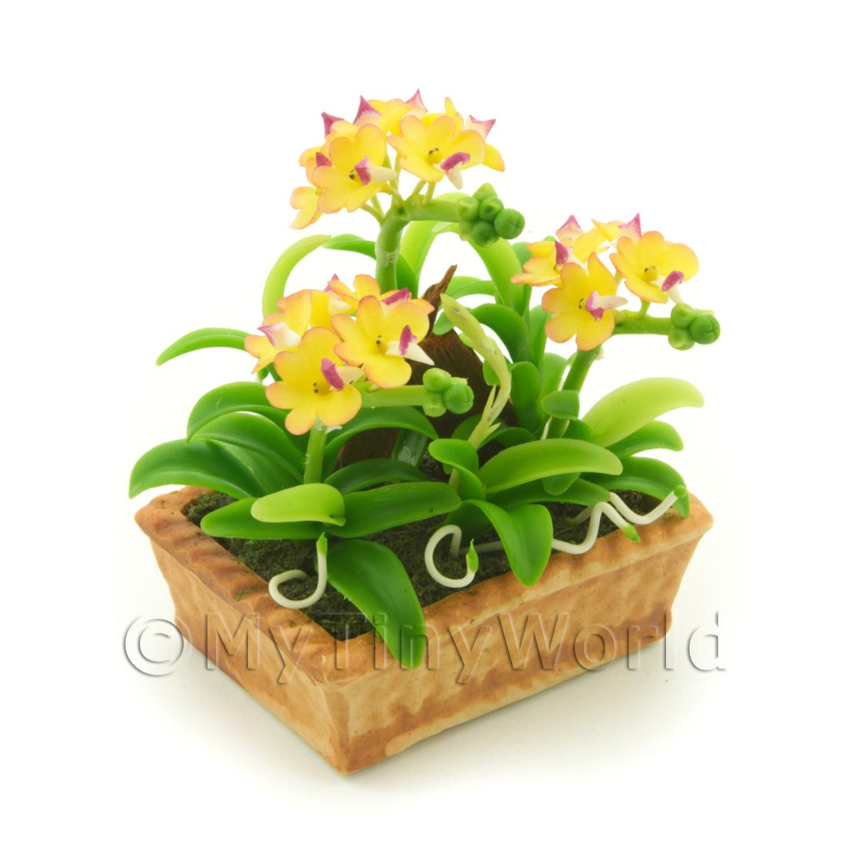 Dolls House Miniature Yellow /Pink Dendrobium Orchid Display