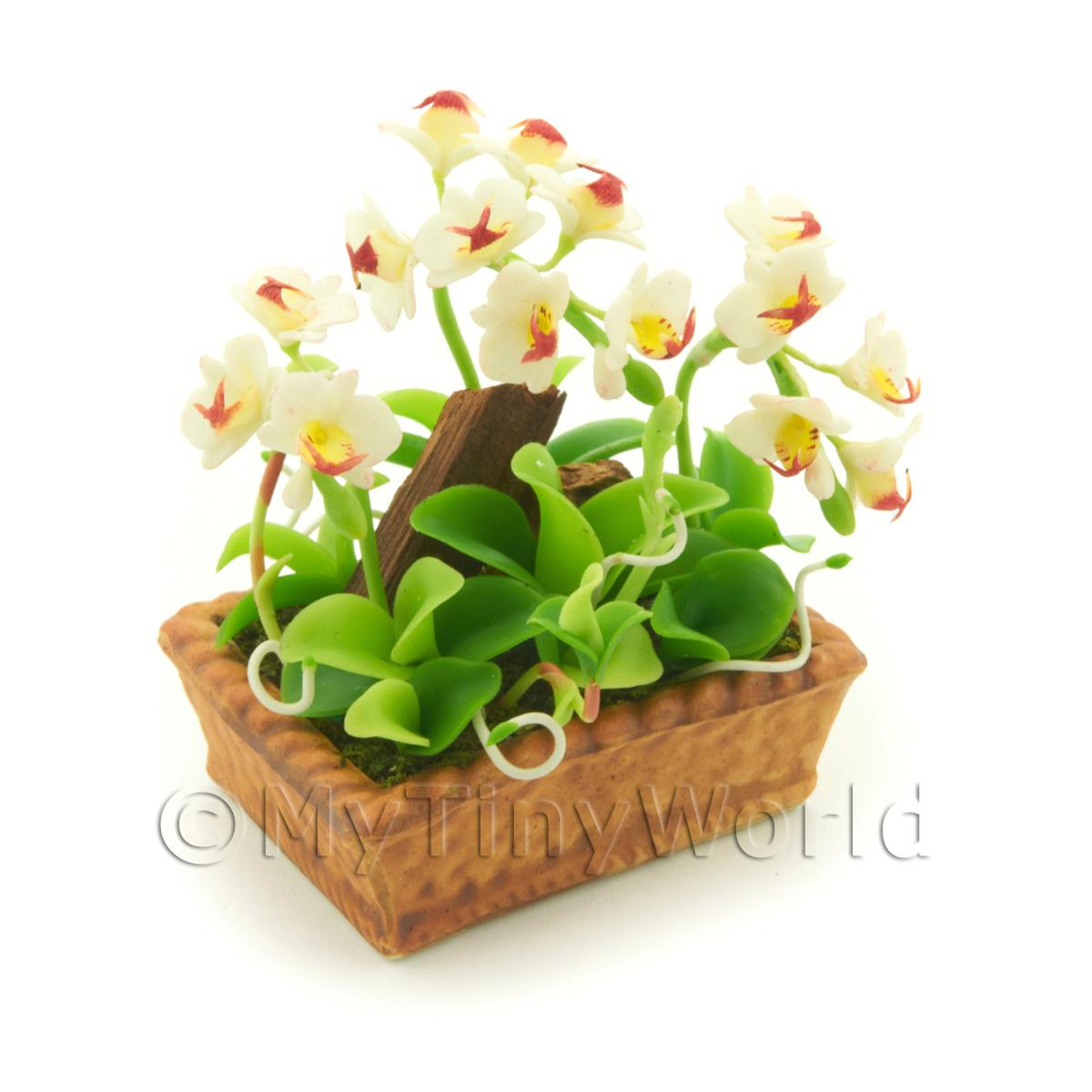 Dolls House Miniature White Dendrobium Orchid Display
