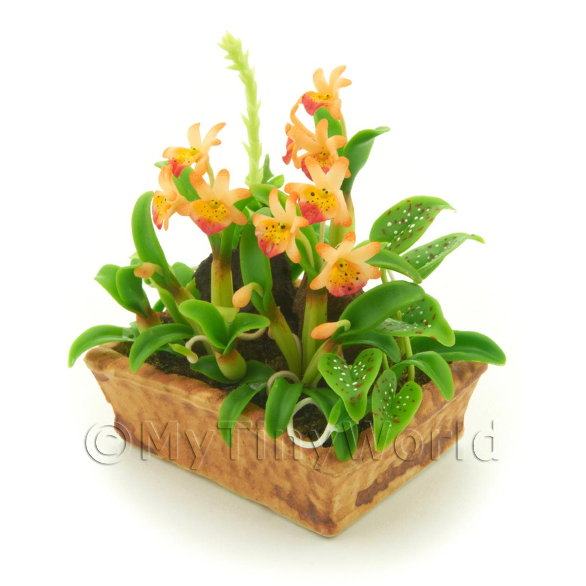 Dolls House Miniature Peach Demdrobium Orchid Display