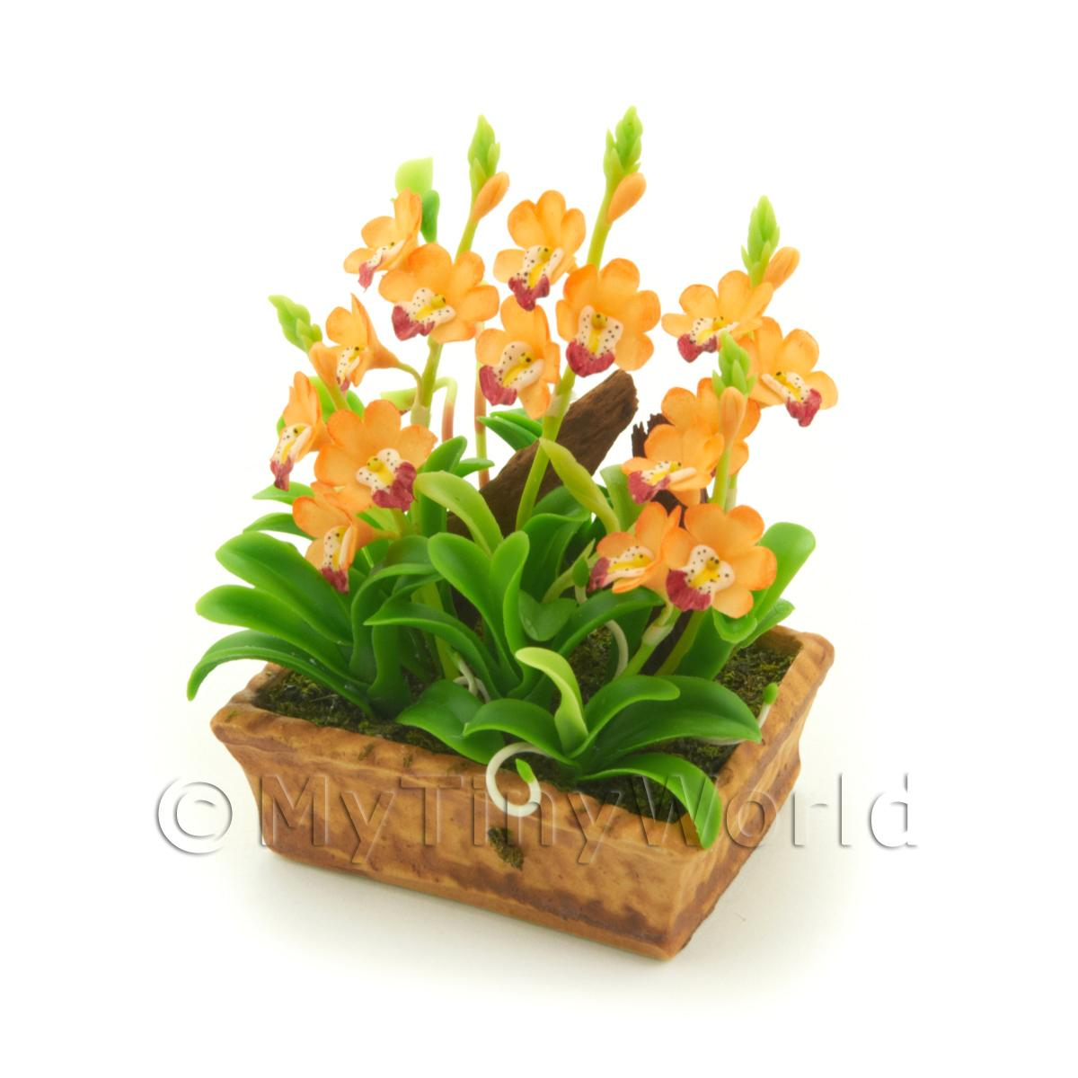 Dolls House Miniature Peach / Yellow Cattleya Orchid Display