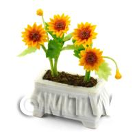 Miniature Sunflowers in a White Flower Box