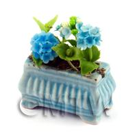 Light Blue Miniature Verbenas in a Blue Flower Pot