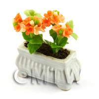 Orange Miniature Verbenas in a White Flower Pot