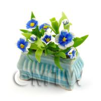 Miniature Blue and White Flowers in a Pot