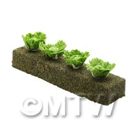 Dolls House Miniature - Strip of 4 Miniature Green Cabbage For The Allotment