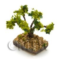 Dolls House Miniature 1/12th Scale Bonsai Tree