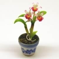 Dolls House Miniature Red Soph Orchid