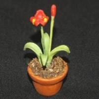Dolls House Miniature Potted Red and Yellow Iris