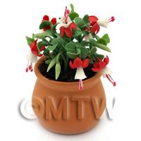Miniature Red Fuchsias in a Terracotta