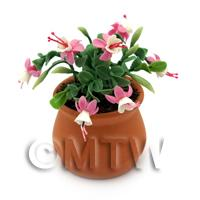 Miniature Pink Fuchsias in a Terracotta Pot
