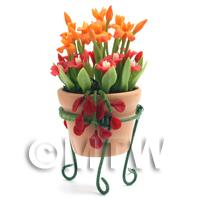 Miniature Orange   Red Flowers In A Standing Pot