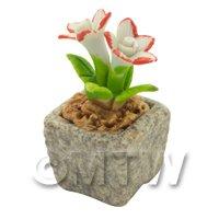 Miniature Handmade Dual Coloured Ceramic Flower (CFD02)