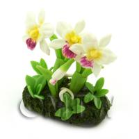 Dolls House Miniature Flower Bed Cattleya Orchid