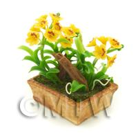 Dolls House Miniature Dark Yellow Dendrobium Orchid Display