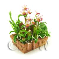 Dolls House Miniature - Dolls House Miniature White /Pink/Dark Pink Cattleya Orchid Display
