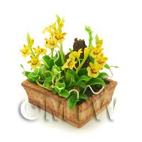 Dolls House Miniature Yellow Striped Dendrobium Orchid Display