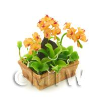 Dolls House Miniature Peach / Red Cattleya Orchid Display
