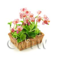 Dolls House Miniature Pink Cymbidium Orchid Display