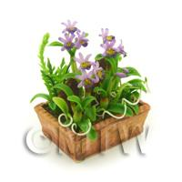 Dolls House Miniature Violet Dendrobium Orchid Display