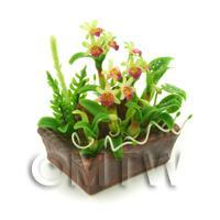 Dolls House Miniature Pale Green / Pink Demdrobium Orchids