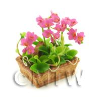 Dolls House Miniature Light Purple Cattleya Orchid Display