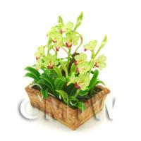 Dolls House Miniature Pale Green / Red Cattleya Orchid Display