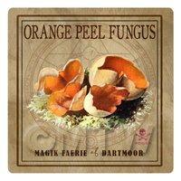 Dolls House Miniature Apothecary Orange Peel Fungi Colour Box Label