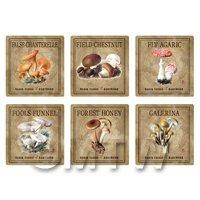 Dolls House Miniature Apothecary Fungi Square Colour Box Label Set 3