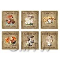 Dolls House Miniature Apothecary Fungi Square Colour Box Label Set 4