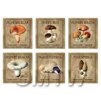Dolls House Miniature Apothecary Fungi Square Colour Box Label Set 5