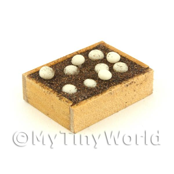 Miniature Garden Wooden Crate With Growing Mushrooms