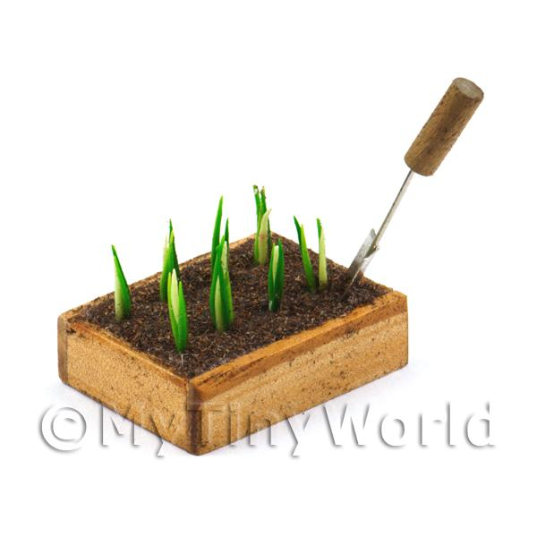 Miniature Garden Wooden Crate With Growing White Onions