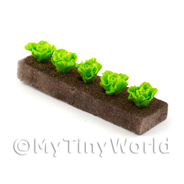 Dolls House Miniature  | Strip of 5 Miniature Lettuces For The Allotment