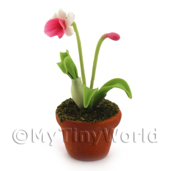 Dolls House Miniature  | Dolls House Miniature Potted Pink and White Flower