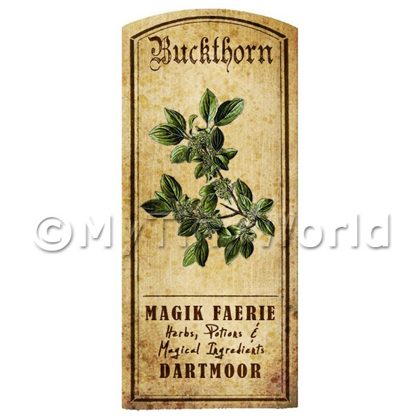Dolls House Miniature  | Dolls House Herbalist/Apothecary Buckthorn Herb Short Colour Label