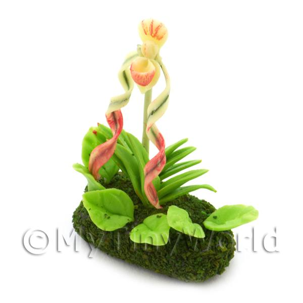 Dolls House Miniature  | Dolls House Miniature Flower Bed Ladies Slipper Orchid