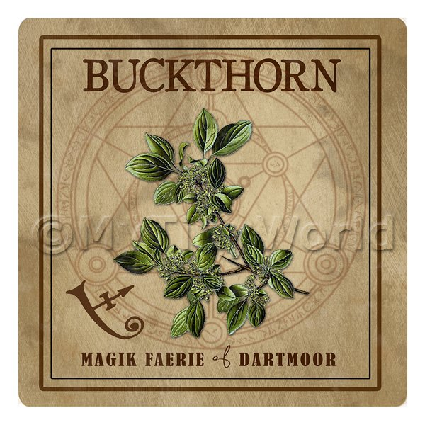 Dolls House Herbalist/Apothecary Square Buckthorn Herb Label