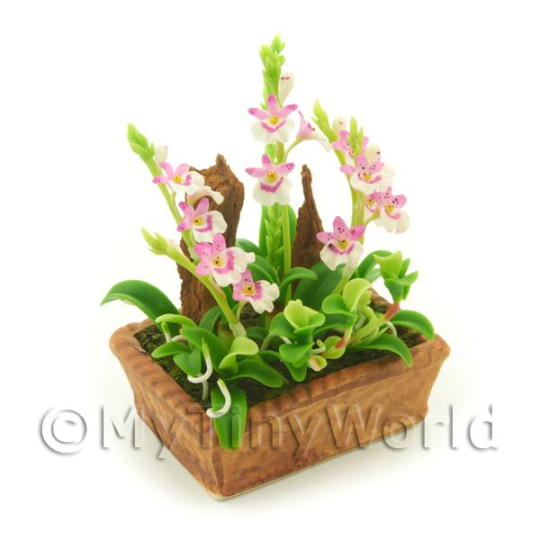 Dolls House Miniature  | Dolls House Miniature Pink and White Cattleya Orchid Display