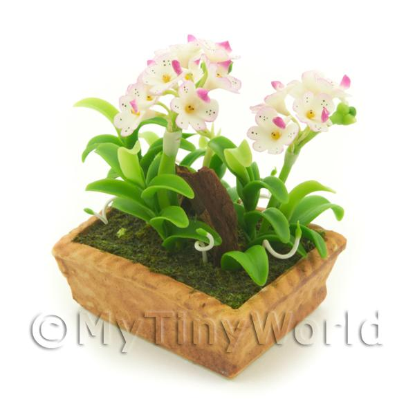 Dolls House Miniature White / Pink Spotted Orchid Display