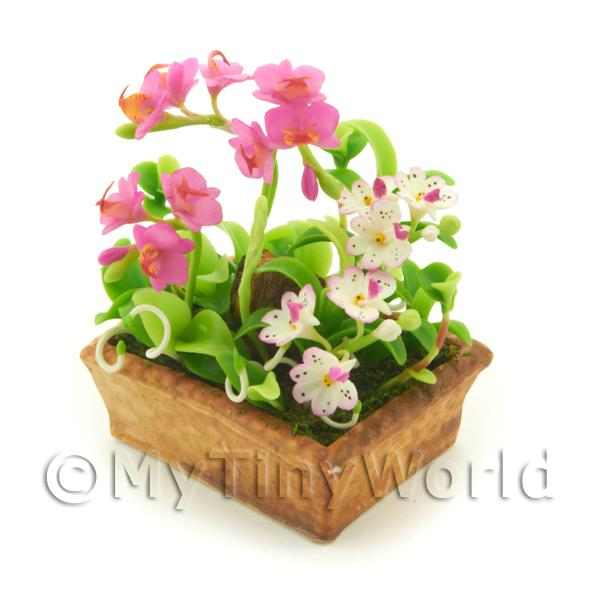 1/12 Scale Dolls House Miniatures  | Dolls House Pink Cattleya And White Spotted Cattleya Orchids