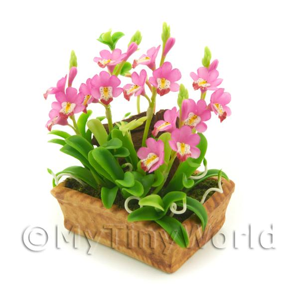 1/12 Scale Dolls House Miniatures  | Dolls House Miniature Light Pink Cattleya Orchid Display