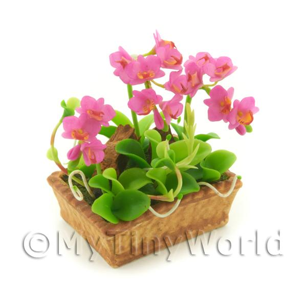 Dolls House Miniature Light Purple Cattleya Orchid Display