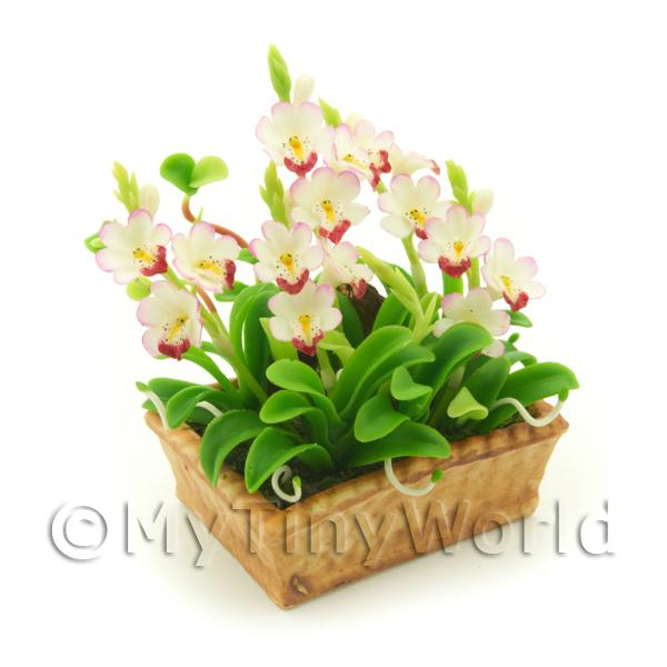 Dolls House Miniature White / Red Cattleya Orchid Display