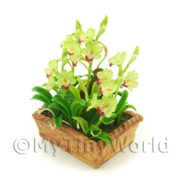 1/12 Scale Dolls House Miniatures  | Dolls House Miniature Pale Green / Red Cattleya Orchid Display