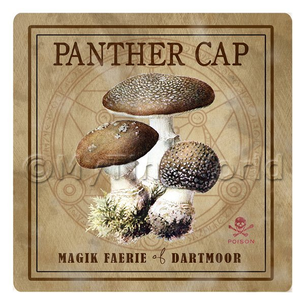 Dolls House Miniature Apothecary Panther Cap Fungi Colour Box Label