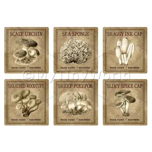 Dolls House Miniature  | Dolls House Miniature Apothecary Fungi Square Sepia Box Label Set 8